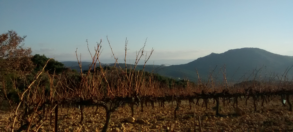 Vaucluse vigne Provence