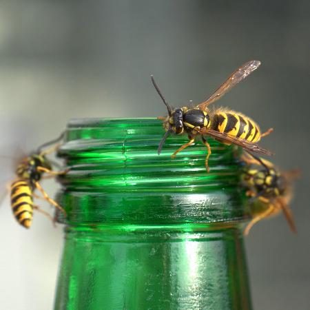 Des enfants et des guêpes : les insectes piqueurs au contact des enfants